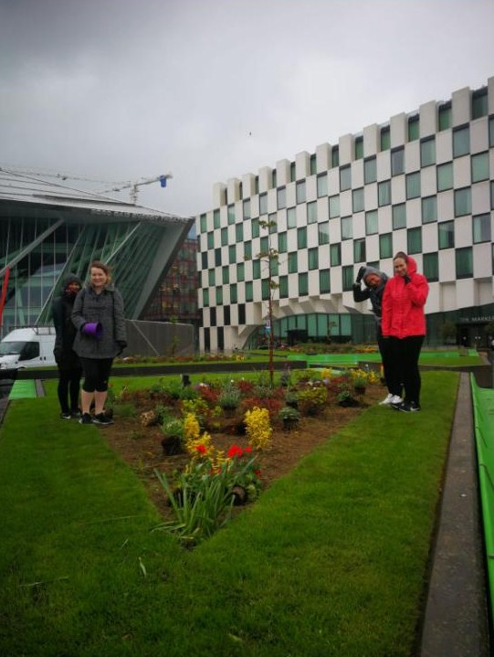 Pollinator-friendly plants in the beds in Grand Canal Square